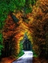 Golden Nature Arched wallpapers