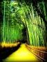 Bamboo Bridge wallpapers