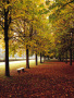 Beautiful Autum wallpapers
