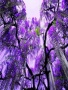 Purple Wist wallpapers