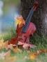 Nature Violin wallpapers