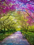 Spring Central Park wallpapers