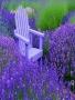 Purple Natures wallpapers