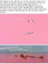 Lake Retba Pink wallpapers