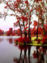 Red Trees wallpapers