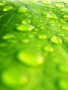 Drops On Leaf wallpapers
