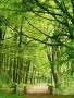 Green Nature Way wallpapers