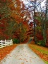 Autummn Road Nature wallpapers