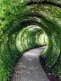 Green Way wallpapers
