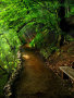 Nice Way Nature wallpapers