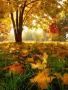 Garden Fall Leafs wallpapers
