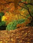 Autumn Fall Leafs wallpapers