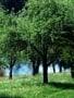 Green Trees Nature wallpapers