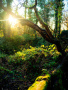 Sunset Green Nature wallpapers