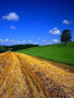 Tractor Tracks wallpapers
