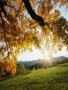 Autumn Ans Sun wallpapers