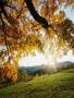 Autumn Ans Sun wallpapers