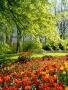 Garden Tulips wallpapers