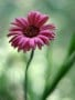 Flower Cool wallpapers