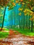 Lovely Autumn Road wallpapers