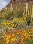 Nice Flowers Field wallpapers