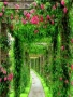 Garden Path wallpapers
