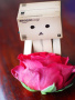 Danbo With Rose wallpapers