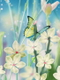 Butterfly Dream wallpapers