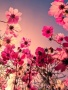 Pink Under Flower wallpapers
