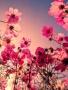 Pink Under Flower wallpapers