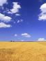 Corn Field wallpapers