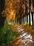 Autumn Road View wallpapers
