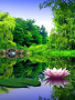 Awesome Green Nature wallpapers