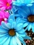 Nice Colors Flowers wallpapers