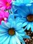 Nice Colors Flowers wallpapers