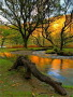 River Autumn View wallpapers