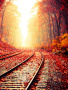 Autumn Nature Track wallpapers