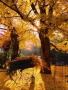 Wistfully Country Autumn wallpapers