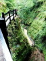 Shanklin Chine wallpapers