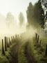 Foggy Forestt wallpapers
