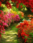 Garden Flowers wallpapers