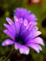 Beautiful Purple Flower wallpapers