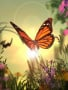 Orange Butterly wallpapers