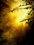 Sunlight In Forest wallpapers