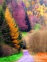 Forest Autumn wallpapers