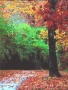 Forest Colors View wallpapers