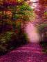 Purple Autumn Falls Road wallpapers
