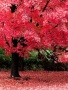 Pink Tree wallpapers