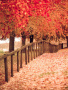 Cute Colors Autumn wallpapers