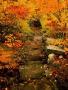 Autumn Acadia Maine wallpapers